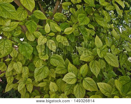green Bush plant with green leaves in the background