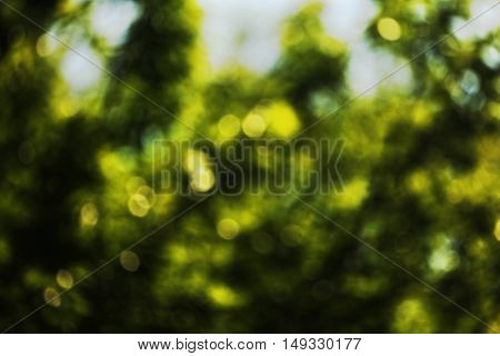 Green leaves in the sun in the middle of spring