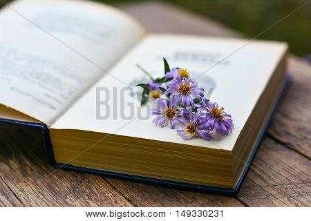 Pink wild flower on old opened book. Selective focus