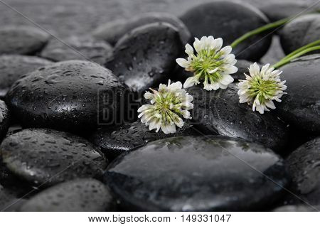 Three white flower with therapy stones
