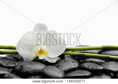 White orchid with black stones ,grove on wet background