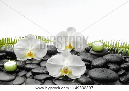 White orchid and candle and fern on black stones