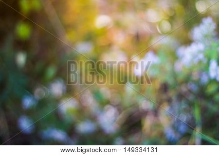 Defocus lens with leaf and tree for abstract backgroun