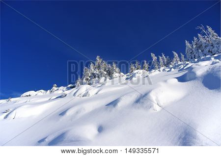 Silhouette of trees in winter on a background of blue sky