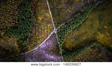 Beautiful picture of the road intersection in the lush green coniferous forest. Aerial view. From above. Picture taken using the copter.