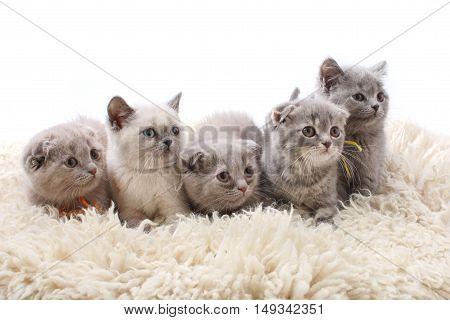 Group Kitties On White Background