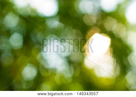 Bokeh Background, Nature Blur Background