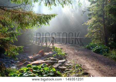 Summer forest landscape. Path in forest with rays of sun.