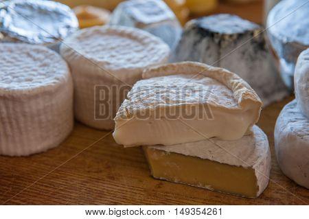 Set of different cheese: camembert, croton, mozzarella, smoked mozzarella and other