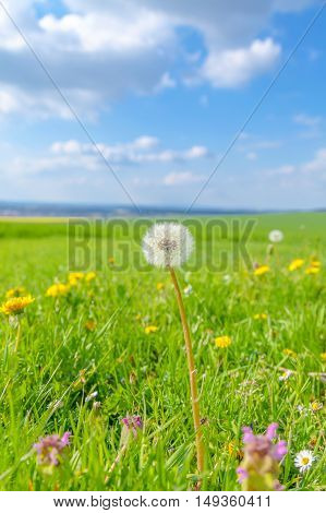 Field of spring flowers and blue sky