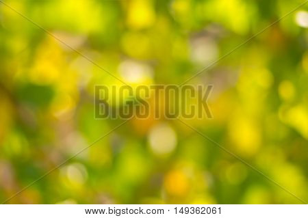 Blurry natural background - pastel colors of bright autumnal season