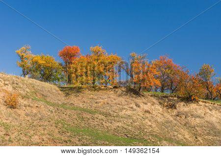 Wild apricot trees on a hill at autumn season in Ukraine