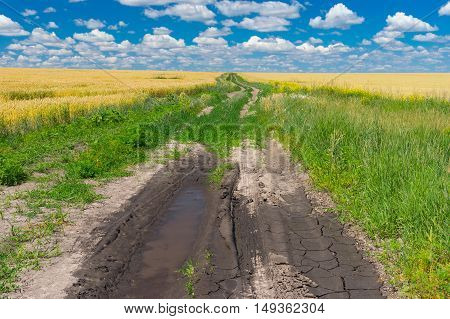 Summer landscape with earth road among of wheat fields
