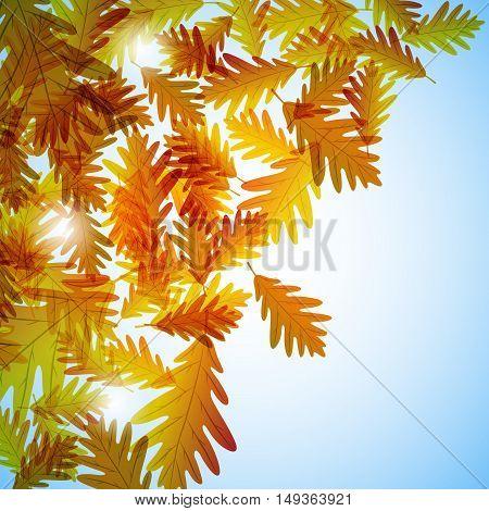 Illustration autumn still life. Oak leaves. Vector background