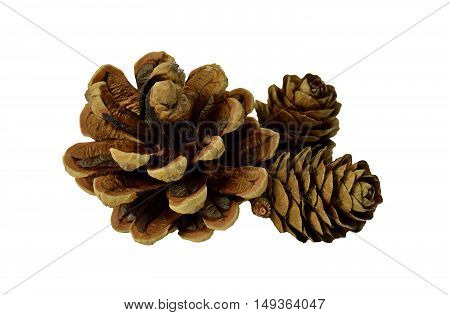 cones various coniferous trees isolated on white without a shadow. Christmas. Natural decorations.