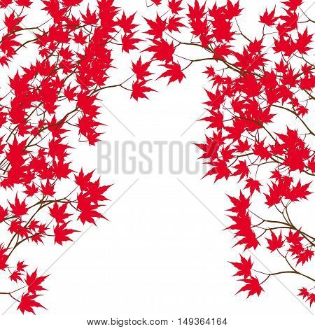 Greeting card. Red maple leaves on the branches on either side. Japanese red maple on a white background. Vector illustration