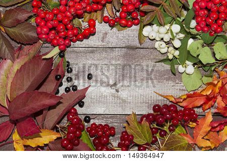 frame of autumn fruits, mountain ash, viburnum berries and maple leaves
