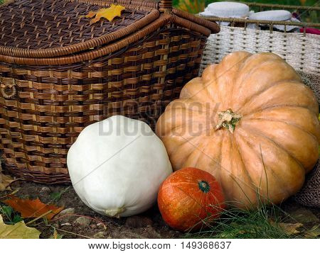 The autumn harvest from the garden on a glade with autumn leaves. Shopping pumpkin and squash