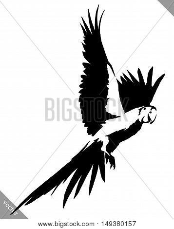 black and white linear paint draw parrot bird vector illustration