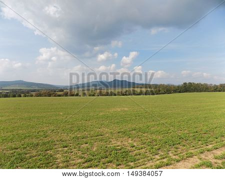 Field and deciduous forest during day in nature