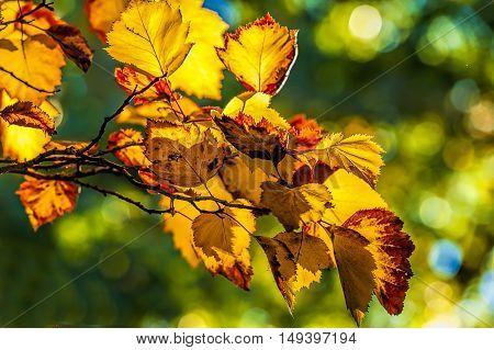 Burnt orange fall leaves in Cannon Hill Park in Spokane Washington.