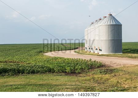 four granary bins sitting next to a curved gravel road and a green planted field under a bright blue sky in the summer time