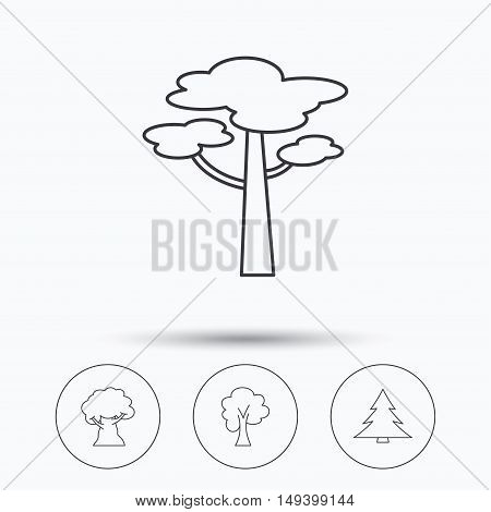 Pine tree, maple and oak-tree icons. Forest trees linear signs. Linear icons in circle buttons. Flat web symbols. Vector