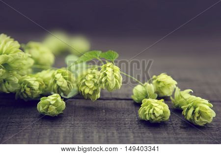 Close Up Of Green Ripe Hop Cones On Dark Rustic Wooden Background. Beer Production Ingredient. Ingre