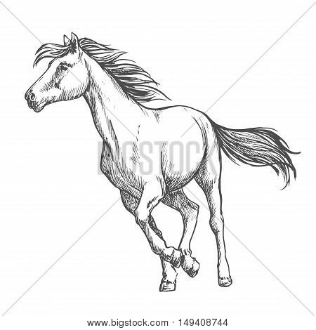White horse running freely. Wild mustang stallion gallops against wind with waving mane and tail. Vector thin line sketch portrait