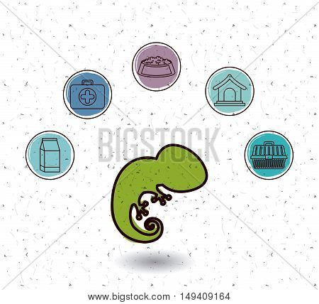 Chameleon and icon set. Animal pet and nature theme. White and texture background. Vector illustration