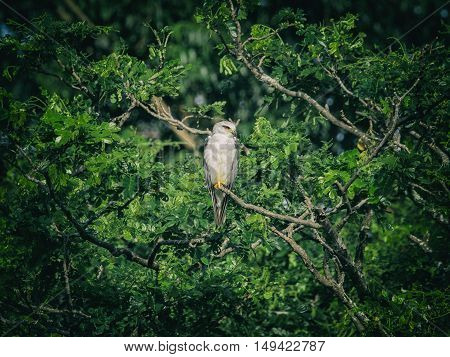 Image of an owl on tree branch. in forest Thailand. Vintage Filter