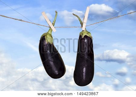 Eggplant Hanging On A Rope