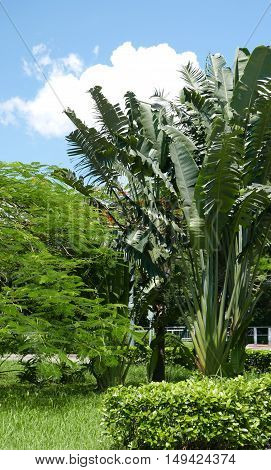 Blue Sky, Green And Tree Plant In Public Garden