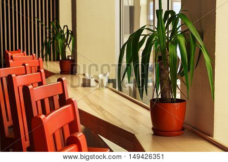 Modern restaurant, bar or cafe interior. Public place interior design, bright red wooden chairs raw, large windows and indoor palm. Morning light, nobody indoors.
