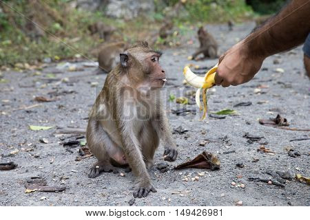 monkey macaque siting on the stone close up