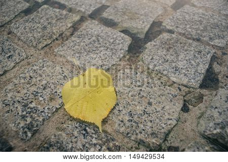 Fallen linden or lime tree leaf on pavement in puddle selective focus
