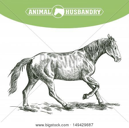 sketch of running horse drawn by hand on a white background. livestock. animal grazing