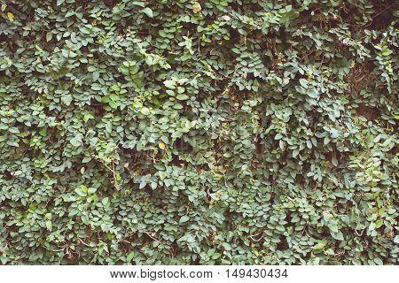 Vintage tone of a green leaf background