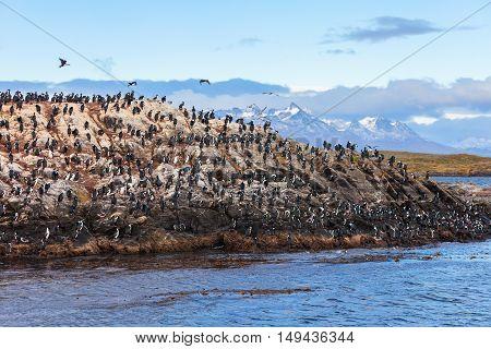 Bird Island Near Ushuaia