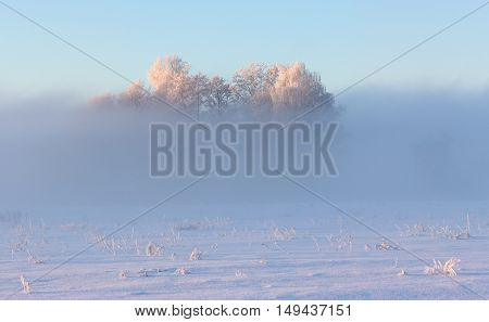 Trees Covered By Frost In Misty Morning