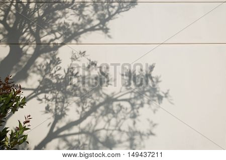 Light and shadows of trees projected onto the wall.
