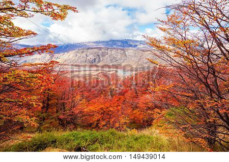 Golden Forest In Patagonia