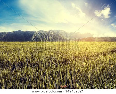 Landscape grassland field with mountain and blue sky with bright sunlight, vintage tone