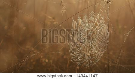 Spider web on dried grass awaits a victim