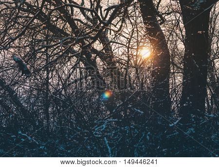 Beautiful frost sunset in the winter forest