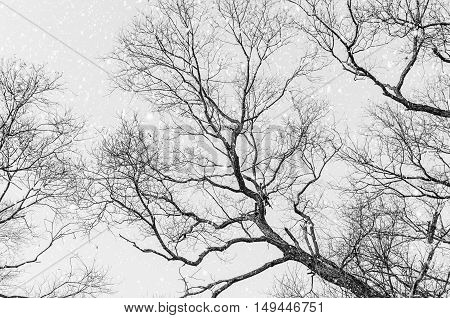 Black and white photo of the tree in winter time