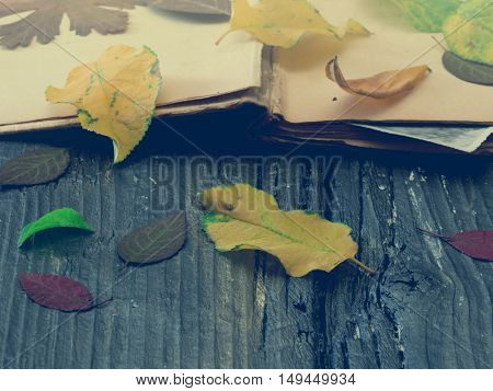 autumn leaves on the opened book