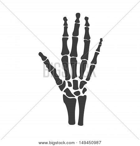 Vector illustration hand bones. Orthopedic human hand skeleton icon. Diagnostic center