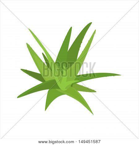 Vector illustration aloe vera isolated on white background. Green plant. Houseplant
