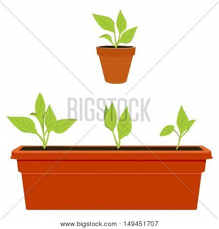 Vector illustration flower plant growing in a pot. Potted plant icon. Little plant seedling. Seedling icon